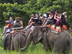 chitwan-elephant-riding